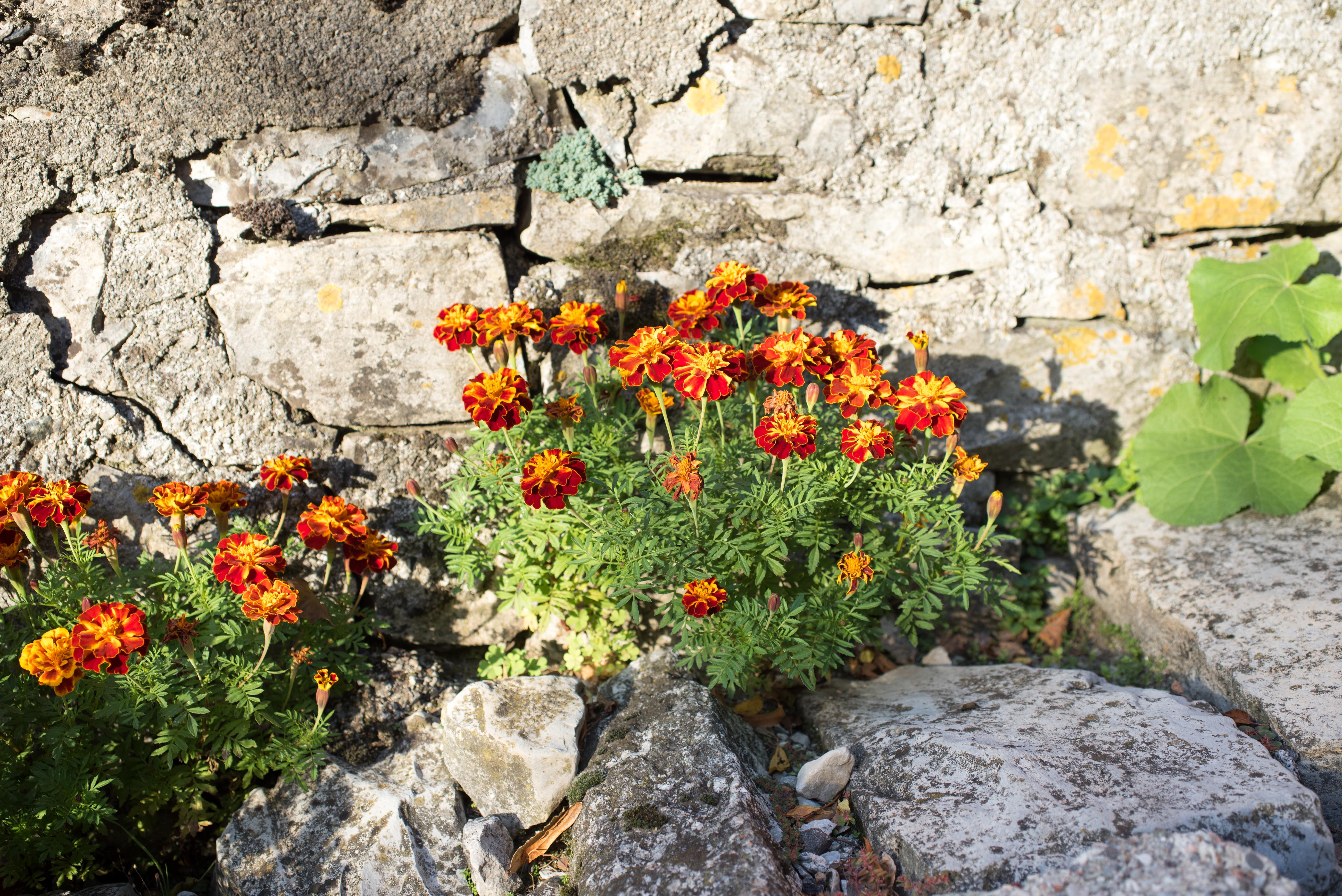 Blumen Riva Fagott